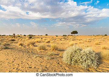 One rhejri tree in desert undet blue sky - One rhejri...