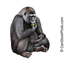 Sitting female Gorilla eating an aple with baby in her...