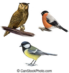 Owl, Bullfinch, and Tit. Isolated realistic illustration on...