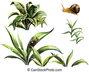 Wild plants and snails, isolated realistic illustration on...