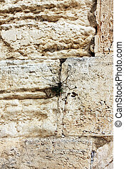 JERUSALEM, ISRAEL - MARCH 03: Jewish worshipers pray at the...