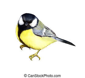 Tit. Great tit, Isolated realistic illustration on white...