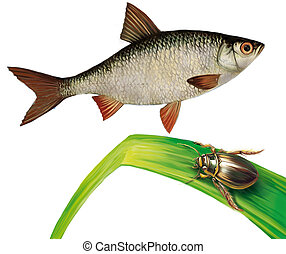 Minnow fish and water bug on water grass. Isolated realistic...