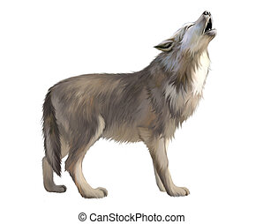 Adult Wolf howl at the moon. Isolated realistic illustration...
