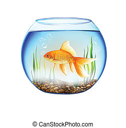Gold fish in a Round aquarium with stones and plants close...