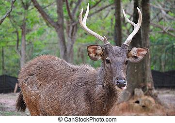 wild deer in alert