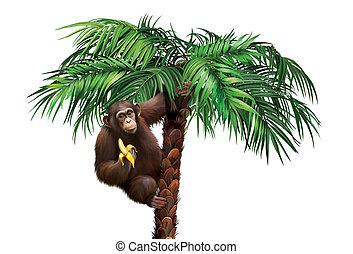 Brown monkey on palm tree. Chimpanzee palm eating a banana.