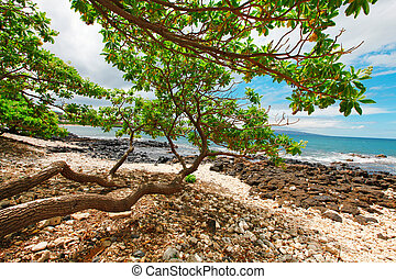 Tropical beach with long tree brenches over sand and rocks.