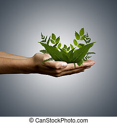 adult hand holding green plant for environmental...