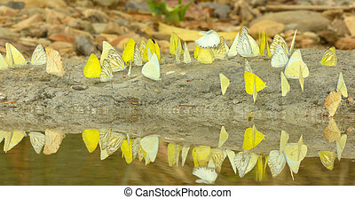 Butterflies flying around the salt marsh. - Butterflies...