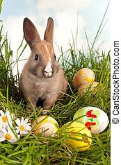 Easter bunny with eggs - Cute baby easter bunny with easter...