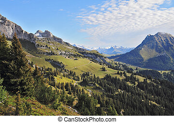 Green meadows and pine forests - Gorgeous weather in the...
