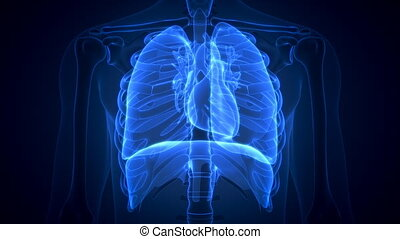 animation of scanning human anatomy showing ill lungs - 3d...