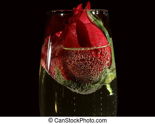 Red Rose in Champagne Glass - Scarlet rode bud in sparkling...