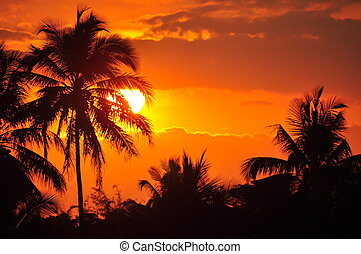 Majestic Sunset - Silhouette Palm Trees at Sunset