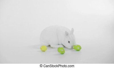 White rabbit with easter eggs rolling around on white...