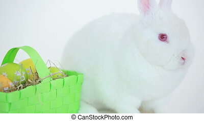 Easter bunny with basket of egg on white background