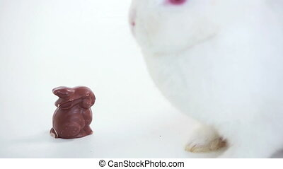 White bunny sniffing chocolate bunny on white background