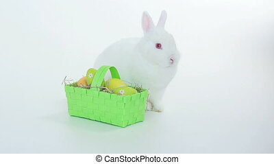 Bunny rabbit with wicker basket of easter eggs on white...