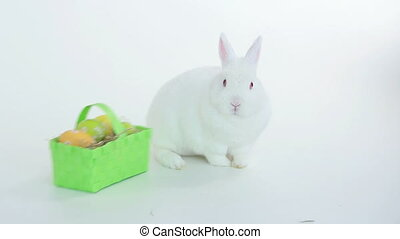 Bunny rabbit sniffing around wicker basket of easter eggs on...