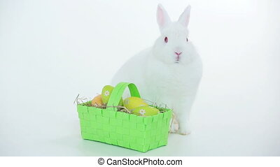 White bunny rabbit with wicker basket of easter eggs on...