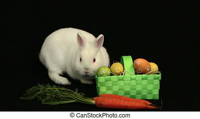White bunny rabbit sniffing around a basket of easter eggs...