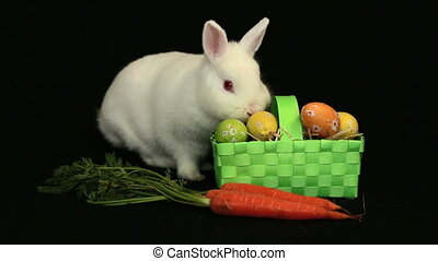 White bunny rabbit sniffing around a carrot and wicker...