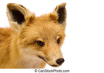 Stuffed Fox - Stuffed brown fox isolated on a white...