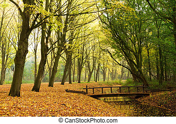 Autumn bridge - Bridge in the forest in autumn in het...