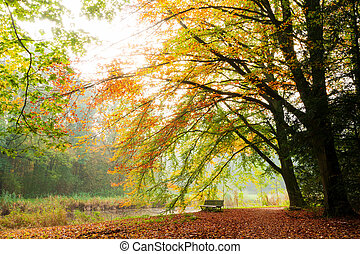 Autumn thoughts - Beautiful autumn view of a bench under a...