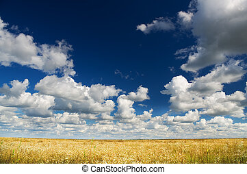 Summer landscape of green fields and blue sky