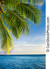 Coconut palm tree leaves over endless ocean with copyspace