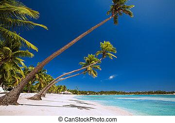 sobre, árvores, tropicais, Poucos, palma, lagoa, branca, praia