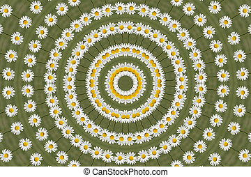 Kaleidoscopic Daisy - Kaleidoscopic Shasta Daisy in growing...