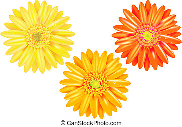 Yellow And Orange Gerbers - 3 Yellow And Orange Gerbers With...