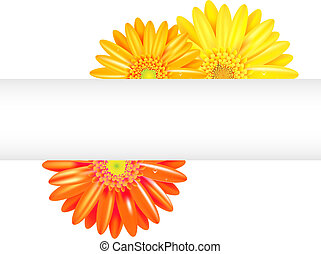 Yellow And Orange Gerbers With Banner