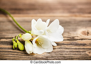 Freesia flower - Beautiful freesia flower on rustic wooden...
