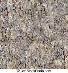 Maple Bark Seamless Texture - Bark of Maple Seamless...