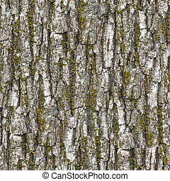 Bark Seamless Texture - Bark Seamless Tileable Texture