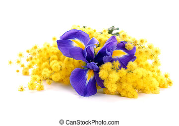 beauty bouquet of flowers - irises and mimosa over white...
