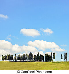 Cypress Trees rows on hill top, rural landscape in Chianti land near Florence. Tuscany, Italy, Europe.