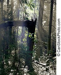 Wood. Dark. Primeval forest. A ray of light. The broken...