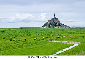 Sheeps grazing near Mont Saint Michel landmark. Normandy,...