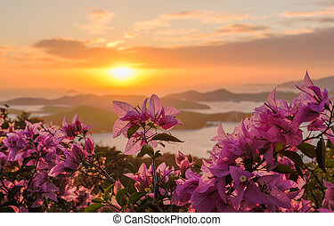 Sunset over Charlotte Amalie St Thomas - Red flowers frame...