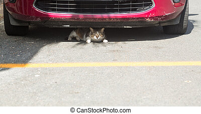 Small cat or kitten hiding under front of car - Small cat or...