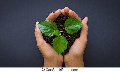 tenencia, planta