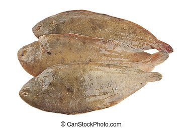 Common sole on white background