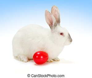 White rabbit with red Easter egg - White rabbit with big red...