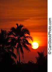 Majestic Sunset - Stock Photo - Silhouette Palm Trees at...