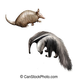 Armadillo and Giant anteater Isolated illustration on white...